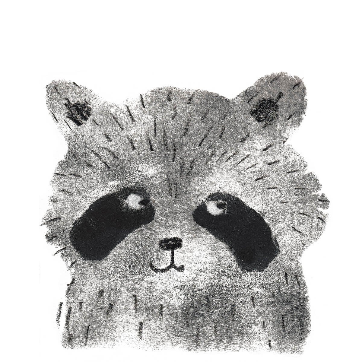 Raccoon_high_res